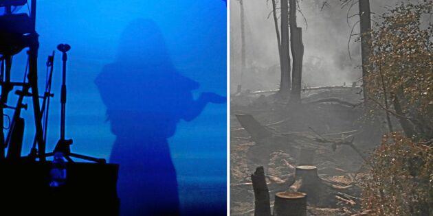 Artister vill spela in pengar till drabbade skogsägare