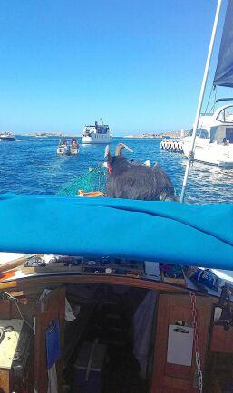 Hugin håller utkik i fören på båten.