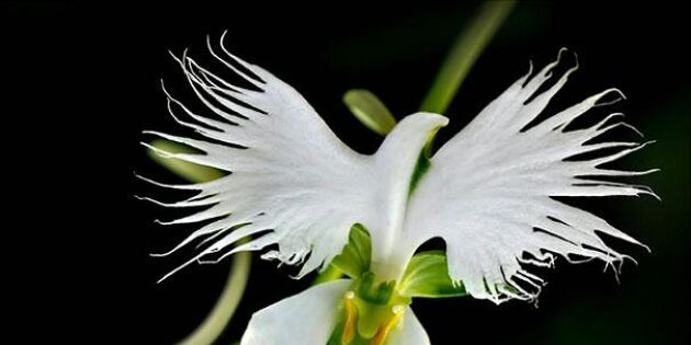 10 fantastiska blommor som ser ut som något helt annat