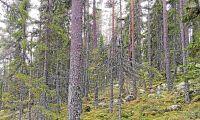 FSC svarar på kritiskt skogsbrev