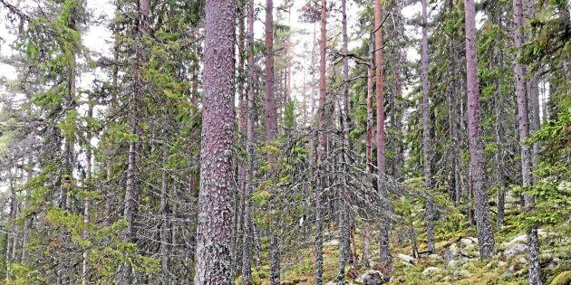 """""""Skogsbruket behöver en ny affärsmodell"""""""