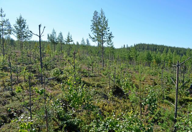 Betesskadorna ökar och inget län når målet. Skogsstyrelsen uppskattar kostnaderna för produktionsbortfallet till 7,2 miljarder kronor per år.