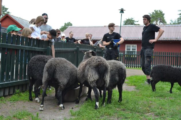 Under den dagliga utfodringsrundan ges besökarna tillfälle att ställa frågor.
