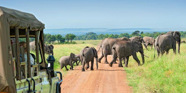 Följ med Land på safari till Kenya