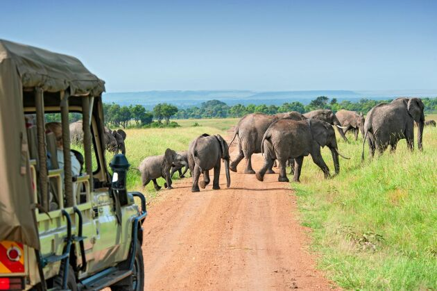 """""""Den mest fantastiska resa som vi har gjort. Massa kunskap och inblick i landets kultur, natur och djurliv"""", är ett av många omdömen som tidigare resedeltagare har lämnat på Kenyaresan."""