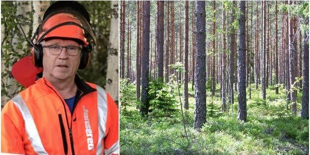 Chockhöjning på skogsförsäkring