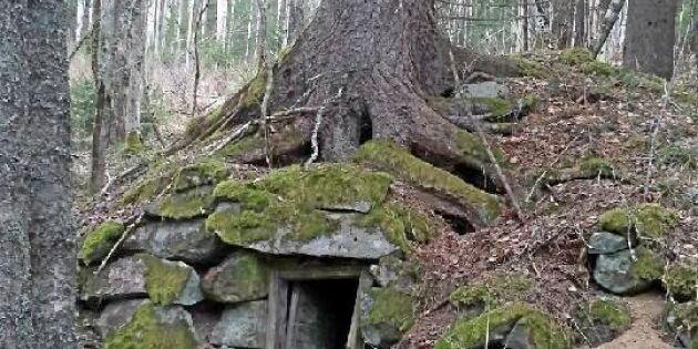 Granen har greppat källaren
