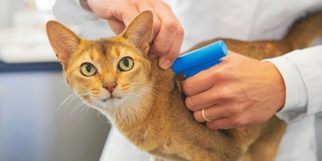 Förslaget: Gör id-märkning av katter obligatorisk