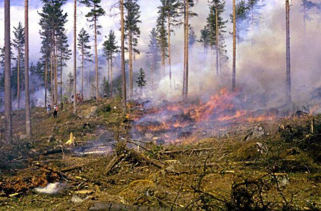 Dyr att släcka. Brandflyget i Kronoberg upptäckte tio bränder i sommar. (Just den här branden är dock fotograferad i ett annat sammanhang)