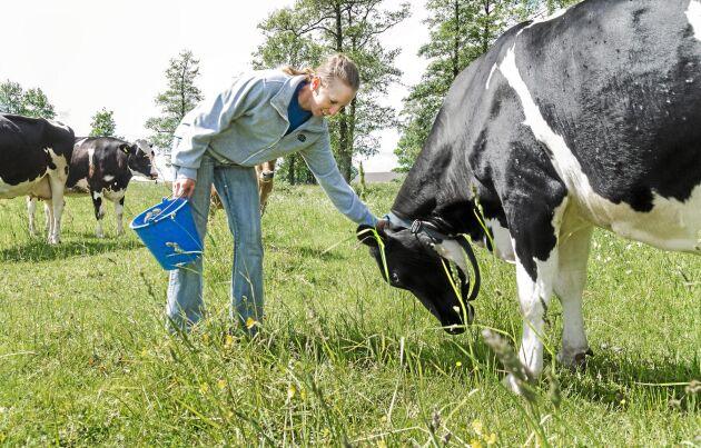 Mjölkproduktionen är huvudnäringen. Anna Carlevad planerar för att utöka med ett ungdjursstall med dikor.