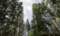 Vinst från skogen lämnar landet