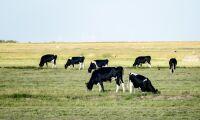 Låga stöd håller tillbaka gräsmjölken