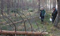 Töväder tog knäcken på gallringsskog