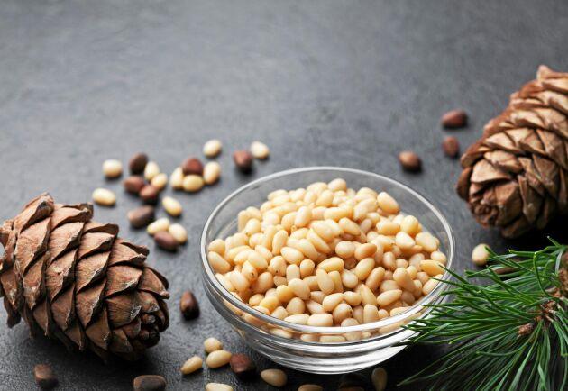 Inuti de hårda fröna i kottens fjäll döljer sig mjuka pinjenötter.