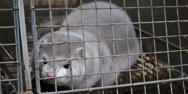 Djurens rätt använder olagliga bilder