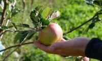 Nära odlarsamarbete bar frukt