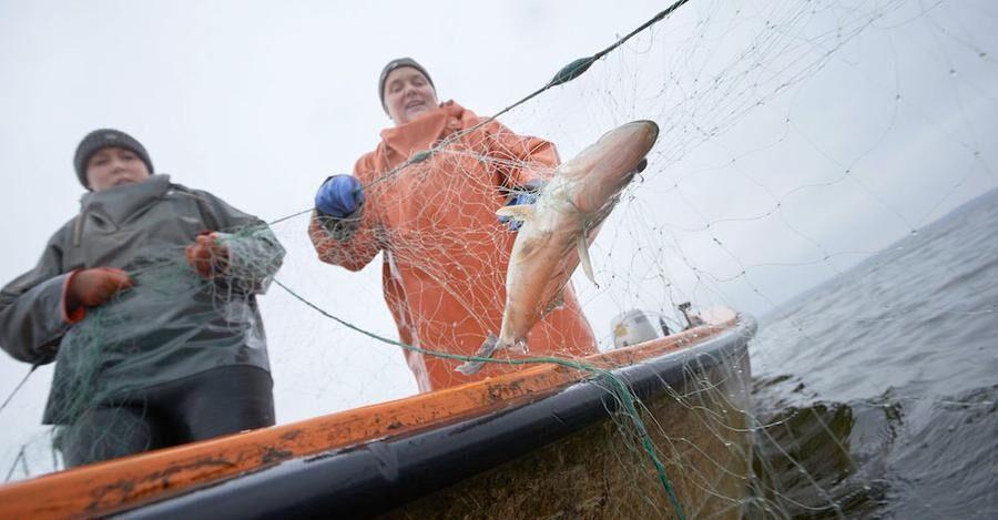 Anna och Carina vittjar näten på Ringsjöm - idag var fångsten ganska mager.