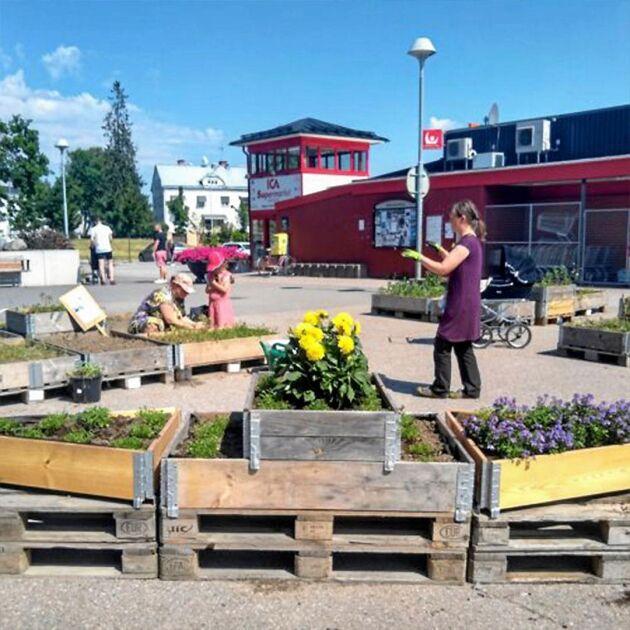 Asfalten har fått grönt liv mitt i Örbyhus.