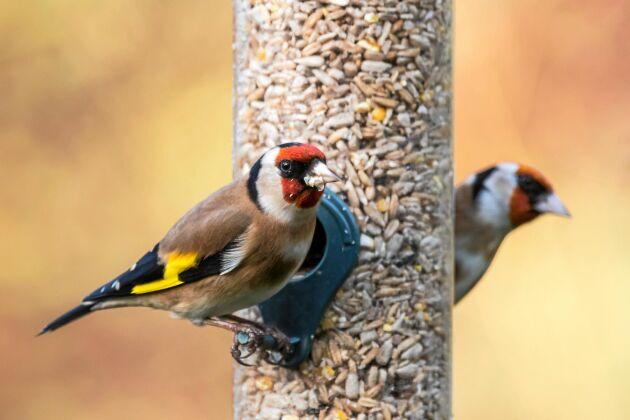 Det finns många olika fågelmatare att välja mellan.