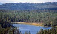 Rekordhöga priser på skog