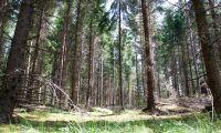 Topp-pris på skogsfastighet efter budstrid