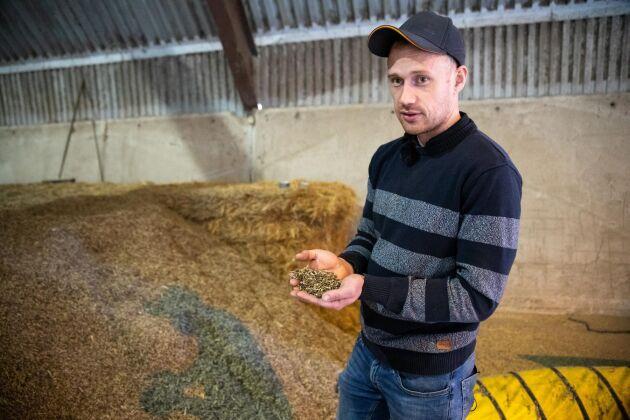 """Skörden av kernza säljs till företaget Patagonia Provisions: """"Man har det bland annat till öl, müsli och knäckebröd"""", säger Patrik Holmgren."""