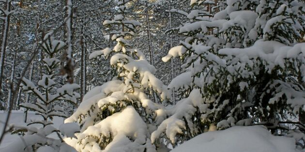 Internationella skogsdagen firas i dag