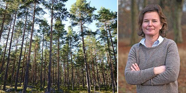 Ökad jämställdhet i skogen är en ägarfråga
