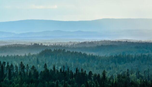 Debattören menar att felaktiga slutsatser dras om bedömning av nyckelbiotoper i nordvästra Sverige.