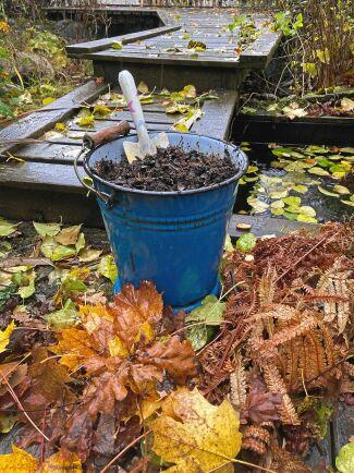 Strunt i regnet. Här har odlaren fått en hel hink med underbar lövmull utan att behöva jobba för det.