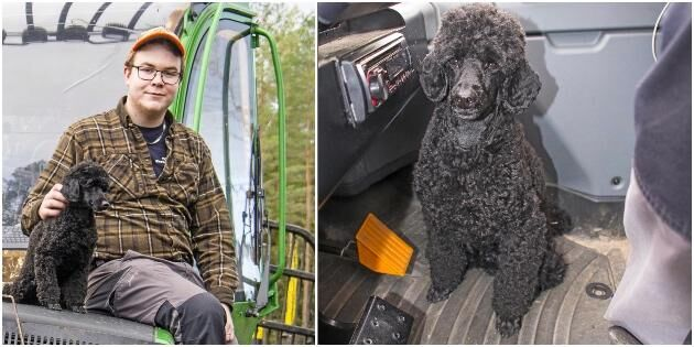 Pongo hjälper husse ratta skogsmaskinen