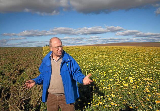 Olof Christerson visar upp krysantemumodlingen, till vänster syns fältet med hybridspenatfrö.