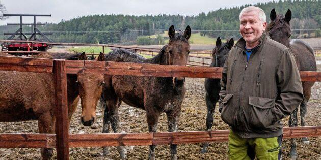 Här håller hästar landskapet öppet