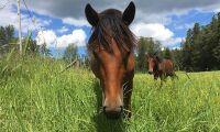 Lagändring kan ge lättnad för hästsäljare