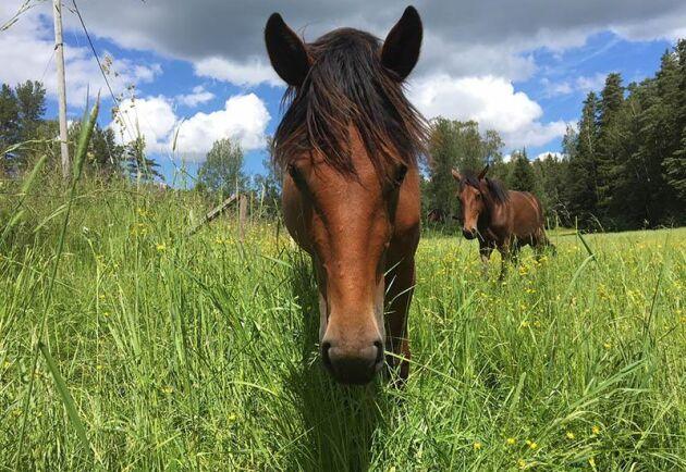 Riksdagen har tidigare uttalat sig för en lagändring när det gäller levande djur som häst i konsumentköplagen.