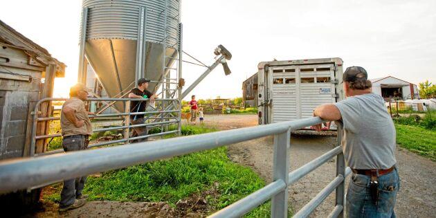 Ingen vill ha deras mjölk – tvingas sälja sina kor