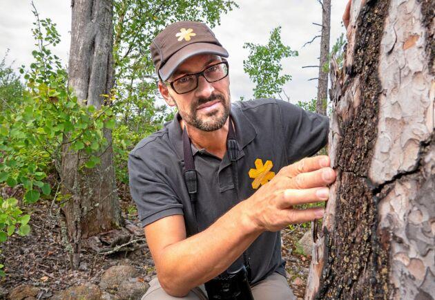 Peder Curman arbetade i nationalparken redan 1999 då branden bröt ut. Här med ett träd som har klarat sig fram tills nu.