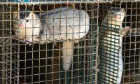 Vill ge djur samma rättigheter som människan