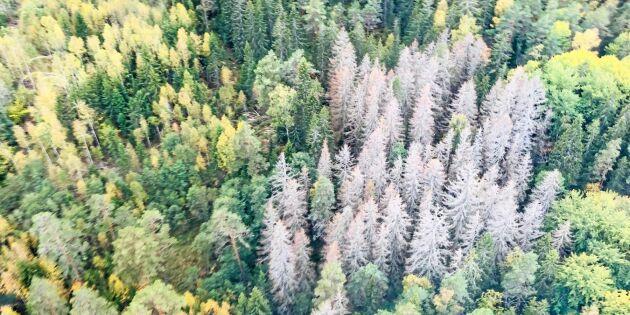 Ändrat klimat ger nya risker i skogen