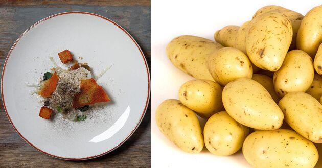 Potatisen från Ryftes Grönsaker på Gotland, som användes i det vinnande papadum-receptet, är varsamt framodlad.