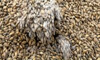 Möglig spannmål oroar lantbrukare