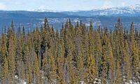Holmen säljer skog för 100 miljoner