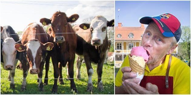 Fullträff göra glass på gårdens mjölk