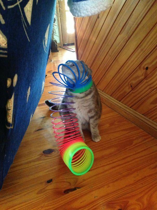katt10