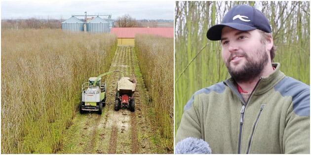 ATL TV: De odlar salix för att slippa viltet