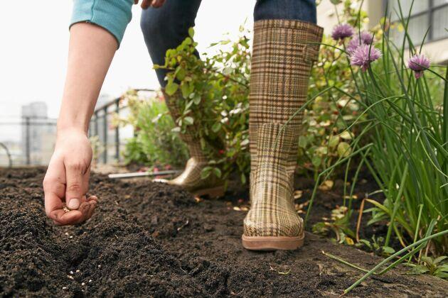 Att variera trädgårdsarbetet är kanske det viktigaste tipset. Det finns många sysslor att göra i trädgården.
