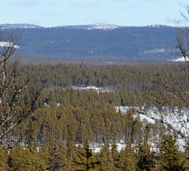 De vidsträckta skogarna och vildmarken runt norrbottniska Aisjaur ger Jenny frihetskänsla.