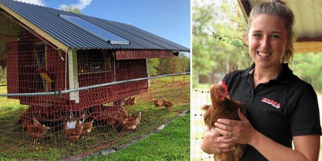 Se så fiffigt! Pappa byggde mobilt hönshus med gård åt dotterns fåglar