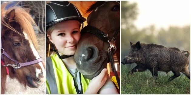 Jägare sköt två hästar av misstag