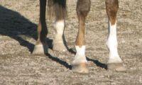 Straffas för att han band hästens ben